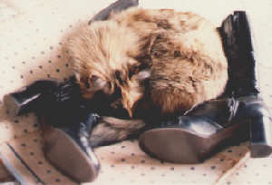 Asleep on boots