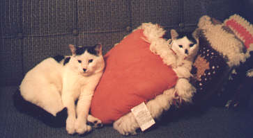 Tommy and Maurice pillows