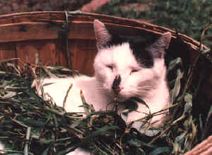 Maurice in weed basket