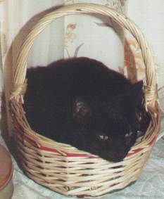 Katya in the basket