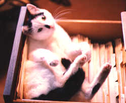 Maurice in file drawer